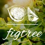 무화과나무의 비유와 안상홍님 – 재림그리스도가 등장하는 시기